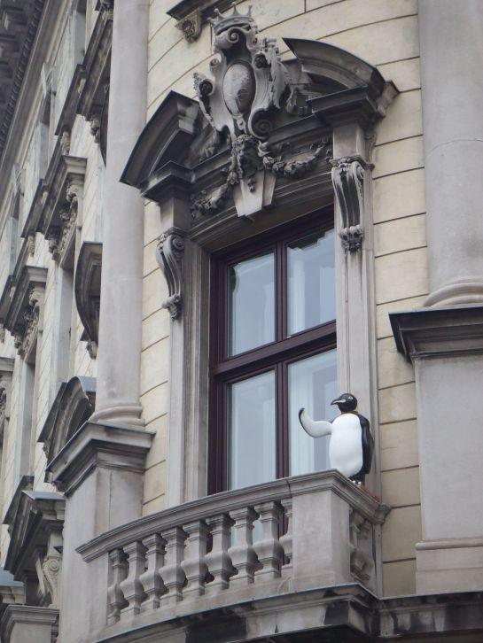 pingui auf dem balkon