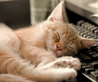 cats_animals_keyboards_sleeping_cat_sleep_keyboard_desktop_2560x1600_hd-wallpaper-834728