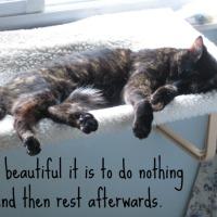lazy Sunday - fauler Sonntag
